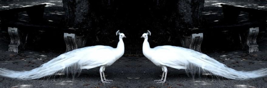 Blanco Real